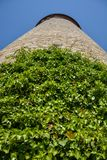 Climbers plant on the medieval tower in the courtyard of the Mar. Ienberg castle with blue sky close up royalty free stock photos