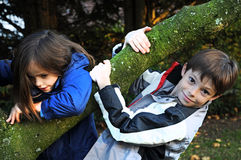 Climbing. Little boy and girl climbing on a tree royalty free stock images