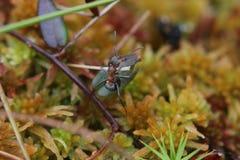 Climbing Ant Royalty Free Stock Image