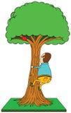 Climbing apple tree Stock Photography