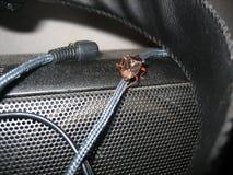 Climbing audio cable Stock Photos