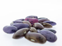 Climbing beans, fire beans on white background Stock Photography