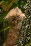 Climbing cat. Kitten in the tree Stock Image