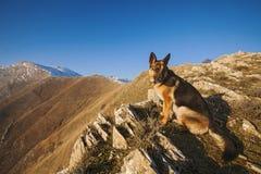 Climbing dog Stock Images