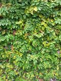 Green wall. Clinbing Fing on the wall royalty free stock image