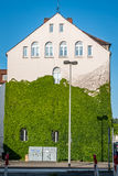 Climbing green plant. In Hannover, Germany Stock Photography