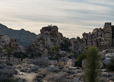 Climbing in Joshua Tree National Park Royalty Free Stock Photo