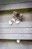 Climbing kitten. Kitten climbing on a fence Royalty Free Stock Image