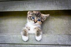 Climbing kitten. Kitten climbing on a fence Royalty Free Stock Photos