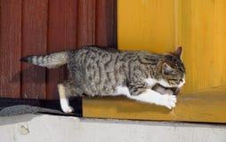 Climbing kitten Royalty Free Stock Image