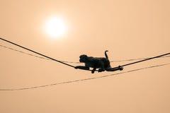 Climbing Monkey Stock Photos