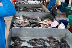 Climbing perch in fish shop Stock Photos
