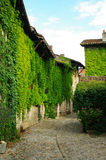 Climbing plant. S on medieval houses in perouges in france Royalty Free Stock Images