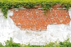 Climbing plant on the brick wall. Frame background, texture Royalty Free Stock Photo