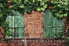 Climbing plant on the old brick wall with windows Royalty Free Stock Photos