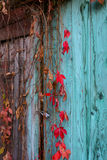 Climbing plant on an old door stock photos