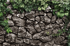 Climbing plant on the old stone wall Royalty Free Stock Photos