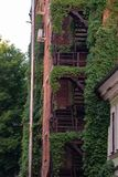 climbing plants on the fire metal stairs of a brick building stock photos