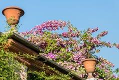 Climbing Plants in Italian Garden Stock Photography