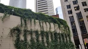 The Climbing Plants On The Street stock image