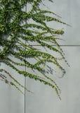 Climbing plants Stock Image