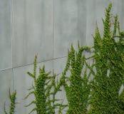 Climbing plants Stock Photos
