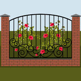 Climbing rose on a background of wrought fence Stock Photos