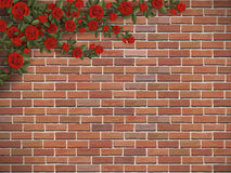 Climbing rose on a brick Stock Photography