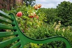 Climbing roses, at Eastcote House Gardens, historic walled garden, London UK