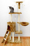 Climbing scratcher for cats. Royalty Free Stock Photos