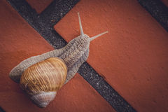 Climbing snail Stock Photo