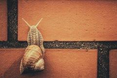 Climbing snail Stock Image