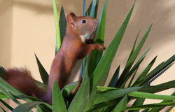 Climbing squirrel Stock Photo