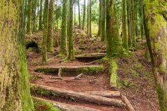 Climbing the stairs in the coniferous forest royalty free stock image