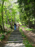 Climbing a stone stair. Two people on a deciduous forest walk, climbing a stone stair in a summer day, in the Swiss Alps stock photo