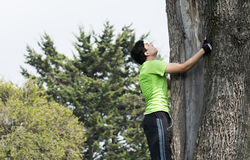 Climbing the tree Royalty Free Stock Photography