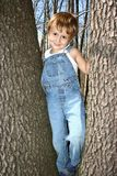 Climbing trees. Young boy climbing trees in bib overalls Stock Image