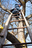 Climbing up tree Royalty Free Stock Photography