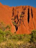 The Climbing Vegetation Stock Image