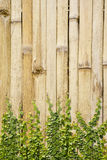 Climbing vine on bamboo wall Stock Image