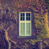 Climbing vines of ivy on a house Royalty Free Stock Image
