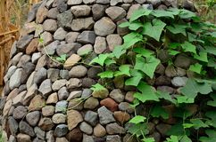 Climblings-Anlage Lizenzfreies Stockfoto
