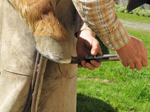 Clinching Horseshoe Nails to the Hoof Stock Images