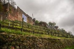 Clingenburg Castle, Klingenberg. Clingenburg Castle at Klingenberg, Germany, Deutschland, April 2017, Spring Stock Photo