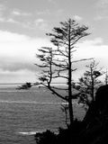 Clinging to the Edge. A coastal tree clings to the edge of a cliff along the Pacific Ocean in this black and white image Royalty Free Stock Photography