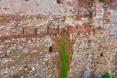Old mysterious wall with clinging vines stock photo