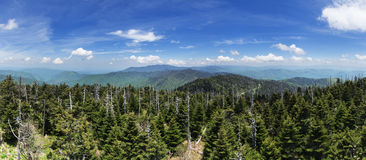 Clingmans Dome Panorama Stock Image