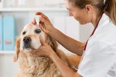 Clinica veterinaria Fotografia Stock Libera da Diritti