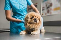 Clinique animale de vétérinaire avec le vétérinaire photographie stock libre de droits