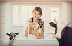 Clinique vétérinaire et animale Image stock